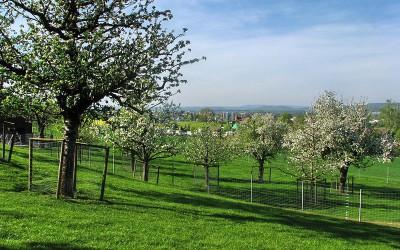 Standard tree orchard