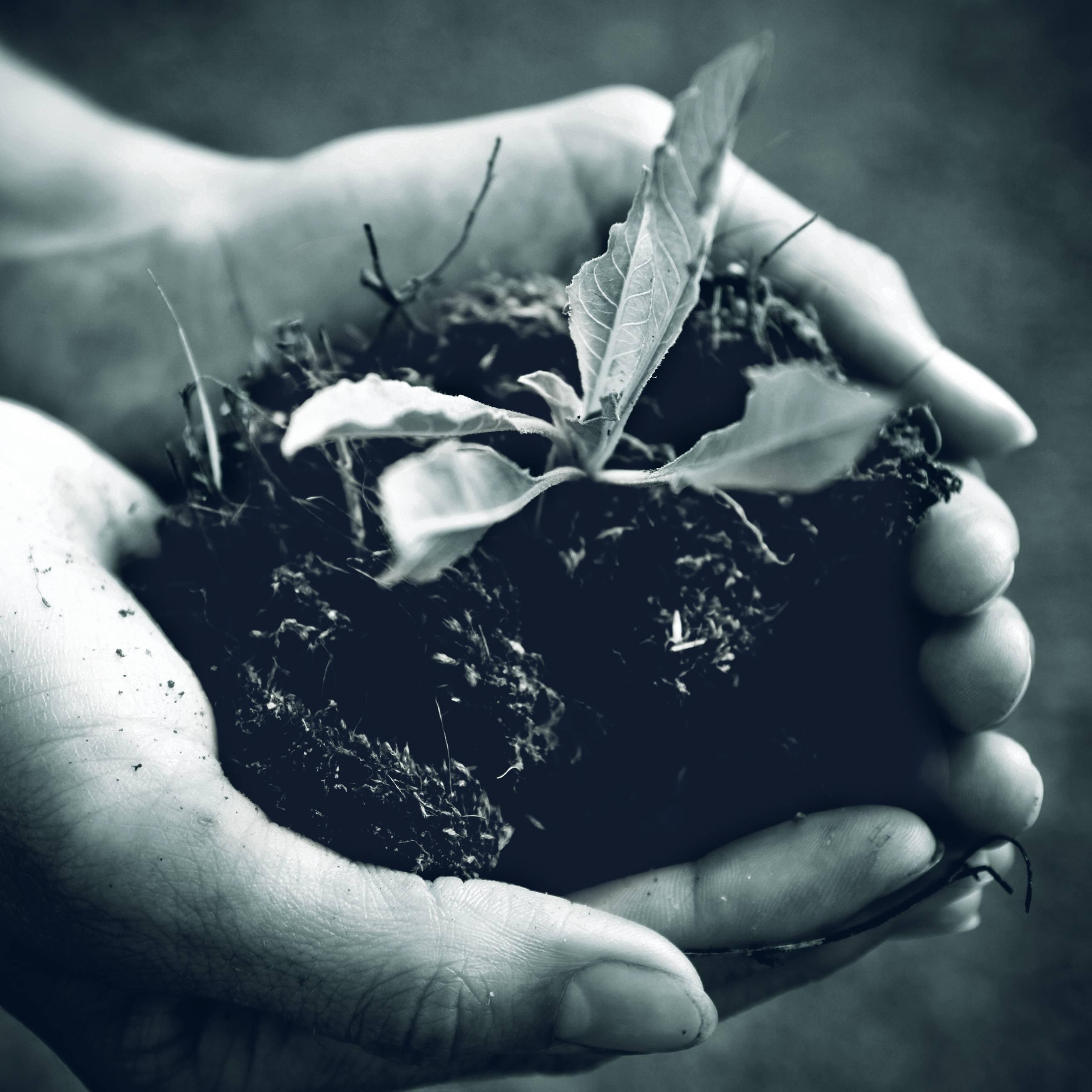 Serre en bois Gabriel Ash - Recommendation de la Royal Horticultural Society