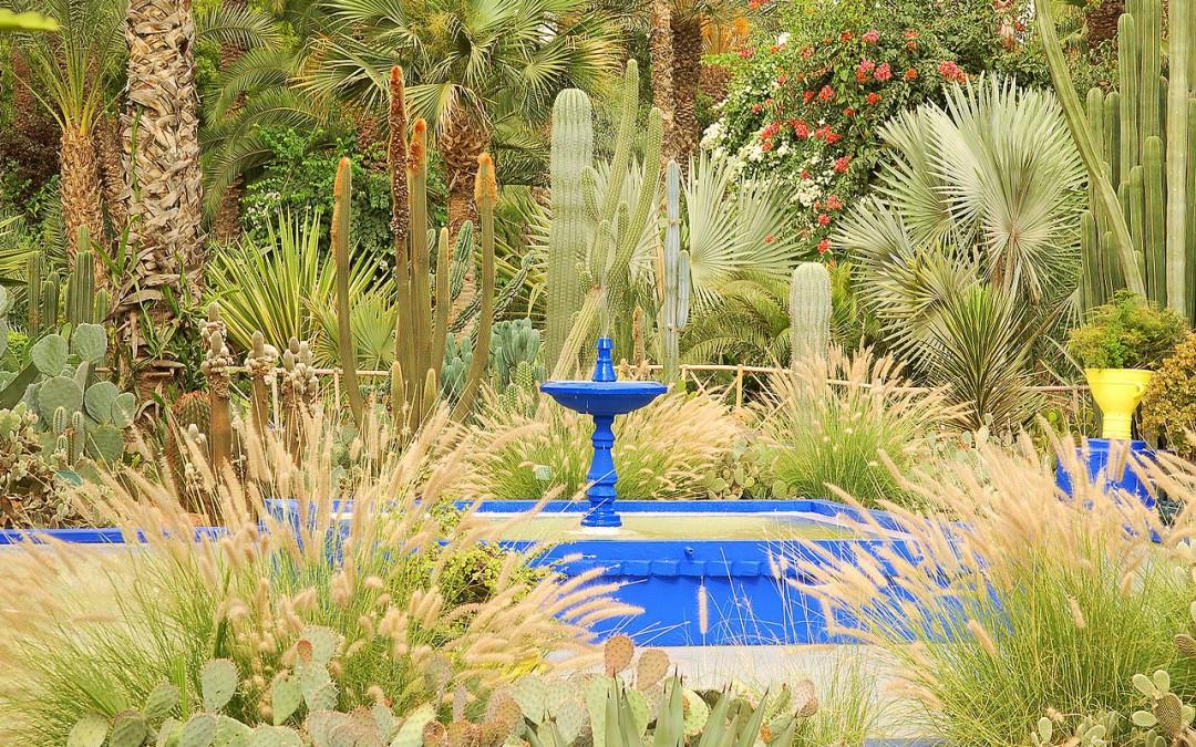 Le jardin majorelle lionel coulot gardens for Jardin majorelle 2015